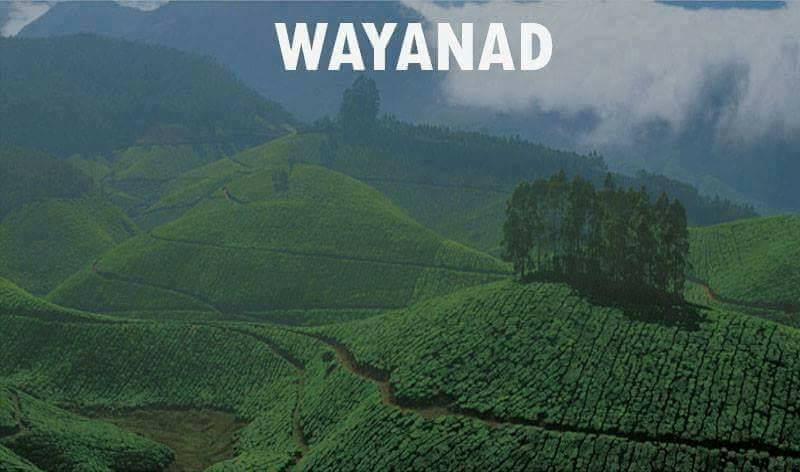 19 wayanad