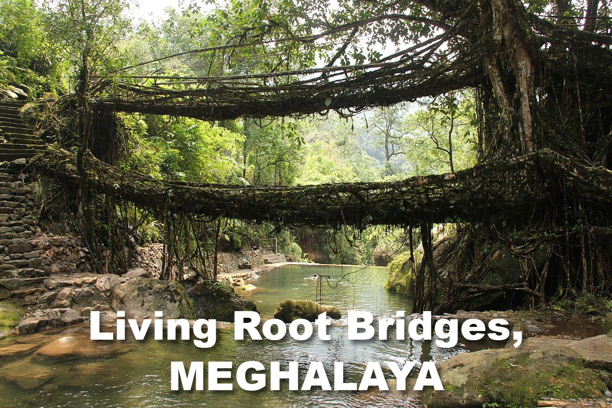 44 Living_root_bridges Nongriat Meghalaya copy